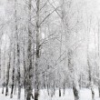 Forest in winter — Stock Photo #36460727