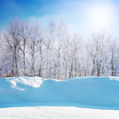 Cena de inverno — Foto Stock