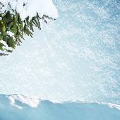Fit tre in snow — Foto Stock