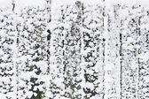 雪墙 — 图库照片