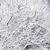 Caminho no parque na neve — Fotografia Stock