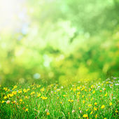 Sunny flower meadow — Stock Photo