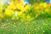 Prado de la flor soleado — Foto de Stock