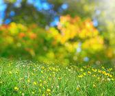 Sunny flower meadow — Stock Photo