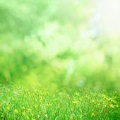 Sunny flower meadow — Zdjęcie stockowe