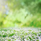 春の自然 — ストック写真