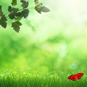 Spring field and butterfly — Stockfoto