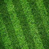 Sport lined grass field — Stock Photo