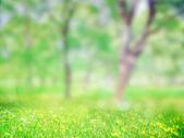 En el parque de la hierba — Foto de Stock
