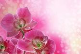 Purple orchids — Stock Photo