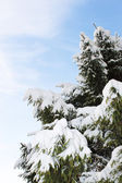 Tree in snow — Foto Stock