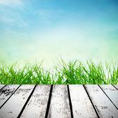 Spring sunny field — Stock Photo