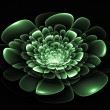Fractal flower in green - Stock Photo