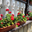 Flower decorated terrace of a house at Moldova - Stock Photo