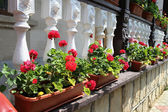 Flower decorated terrace of a house at Moldova — Stock Photo