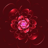Beautiful red flower on red background. — Stock Photo