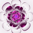 Beautiful purple flower on white background. — Stock Photo
