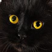 用明亮的黄色眼睛看向你的黑猫 — 图库照片