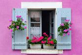 Window box flower arrangement, Burgundy, France — Stock Photo