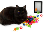 Alphabet and black cat with electronic book on white background. — Stock Photo
