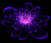 Beautiful blue and purple flower on black background. — Stock Photo