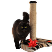 Black cat and cat scratching post isolated on white background — Stock Photo