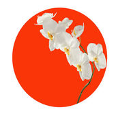 Orchid branch in the red circle. — 图库照片