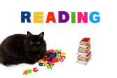Alphabet and black cat with books on white background. — Stock Photo