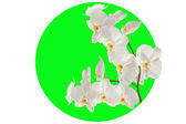 Orchid branch in the green circle. — Stock Photo