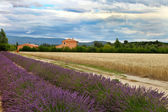 Summer Landscape with Wheat and Lavender field in Provence, sout — Stock Photo