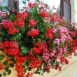 Flowers Decoration of Wall and Windows — Stock Photo #51462667