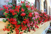 Flowers Decoration of Wall and Windows — Stock Photo