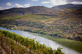 Vineyards of the Douro Valley, Portugal — Stock Photo