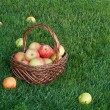 Royalty-Free Stock Photo: Basket with apples on green grass