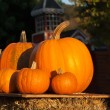 Royalty-Free Stock Photo: Pumpkins for sale