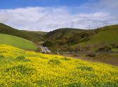 Na jaře — Stock fotografie