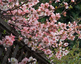 Spring rain — Fotografia Stock