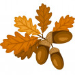 Oak branch with leaves and acorns. Vector illustration. - Stock Vector