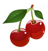 Vector illustration of cherries — Stock Vector