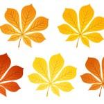 Five autumn chestnut leaves. Vector illustration. — Stock Vector #12849892
