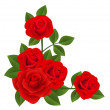 Red roses. Vector illustration. — Stock Vector #13274000