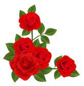 赤いバラ。ベクトル イラスト. — ストックベクタ