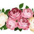Pink and white roses. Vector illustration. — Stock Vector