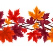 Horizontal seamless background with autumn maple leaves. Vector illustration. — Stock Vector #13644755