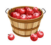 Wooden basket with red apples. Vector illustration. — Stock Vector