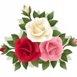 Three roses of various colors. Vector illustration. - Stock Vector