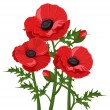 Three red poppies. Vector illustration. - Stock Vector