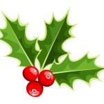 Christmas holly. Vector illustration. — Stock Vector