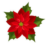 Red poinsettia. Vector illustration. — Stock Vector