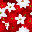 Seamless Christmas background with red and white poinsettias. Vector illustration. — Stock Vector
